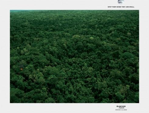 jungle3_aotw
